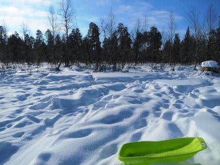 フィンランドのトナカイ、そり オーロラビレッジ